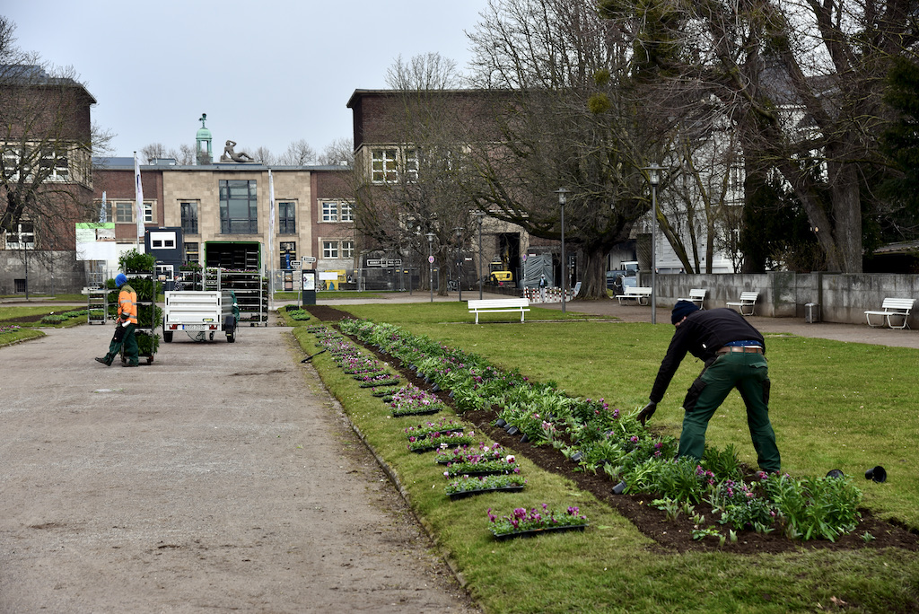 Frühjahrsbepflanzung hier Ehrenhof Foto: LOKALBÜRO
