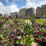 Corneliusplatz in Violett, Rosa und Weiß: Frühlingsblumen blühen in der Innenstadt