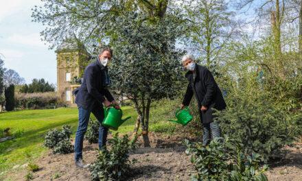 Baum des Jahres 2021: Gartenamt pflanzt Stechpalme im Schlosspark Garath