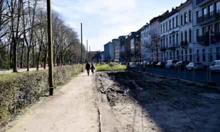 Hofgarten: Keine Baumfällung für Baustraße