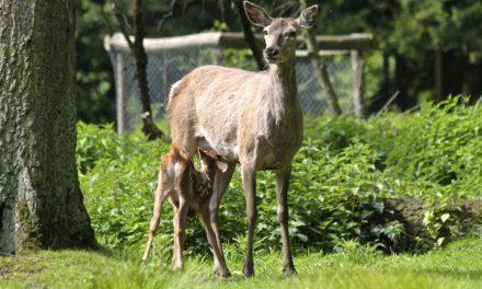 Wildtier-Nachwuchs im Wald schützen