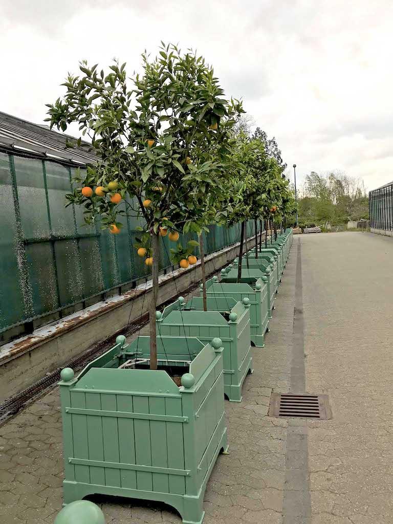 Gartenamt bringt die Kübelpflanzen aus dem Winterquartier in die Parks,(c)Landeshauptstadt Düsseldorf/Gartenamt
