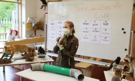 Waldschule startet Videokonferenz-Unterricht für Grundschulen