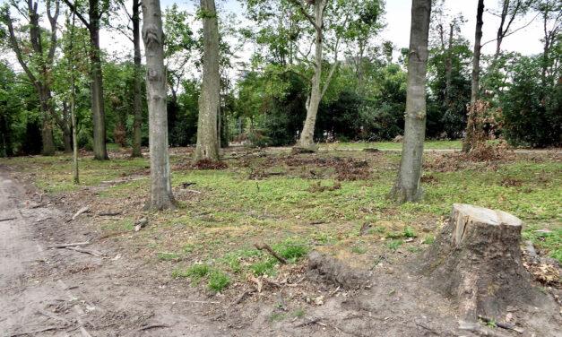 Das Gartenamt muss 19 kranke Bäume fällen