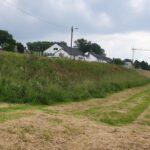 Deichwiesen — die ökologisch wertvollsten Wiesenflächen derStadt