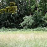 Unterwegs im Grünen: Führungsreihe des Gartenamts startet wieder