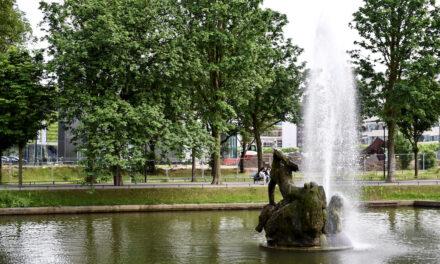 Gartenamt muss 47 abgestorbene Ahornbäume fällen