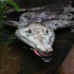 Krokodile — Zootiere des Jahres 2021