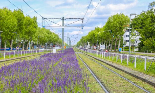 Stadtgrün Naturnah: Düsseldorf erhält Auszeichnung für biologische Vielfalt