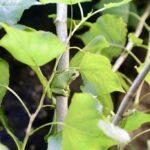 Für mehr Artenschutz von Amphibien: Aquazoo startet Partnerschaft mit WetterOnline