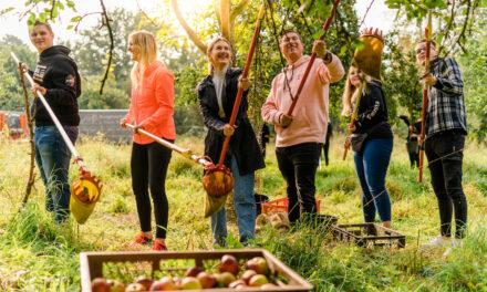 Bankazubis sammeln Äpfel für den gutenZweck