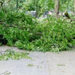 Gartenamt verzeichnet rund 80 umgestürzte Bäume